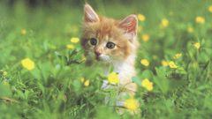 Какими средствами можно очистить ковер от запаха кошачей мочи