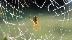Какие есть приметы про пауков