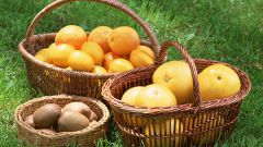 Какова польза витамина С