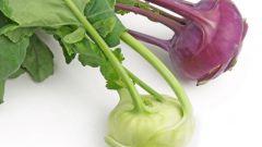 Рецепт блюда из капусты кольраби