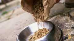 Cat food: is it true that it is harmful to the health of a cat