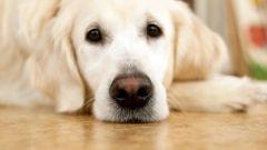 Как завести первую собаку
