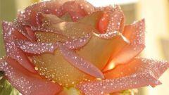 Какой цветок называют цветком любви