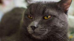 Какие могут быть негативные последствия кастрации кота