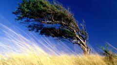 Сколько на свете ветров и как они дуют