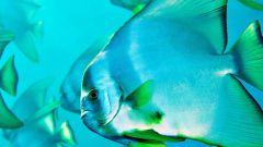 Какая наука изучает рыб