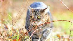Как лечить гормональный сбой у кошки
