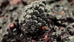 Ежевичный соус с неспелым виноградом