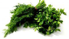 Как сохранить зелень в морозильной камере