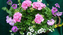 Комнатные растения и отпуск
