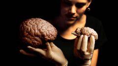 Как научиться быстро запоминать информацию