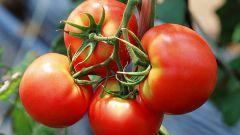 Стоит ли беременным есть помидоры