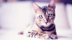 В каком возрасте можно стерилизовать кошек