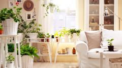 Какими растениями можно декорировать квартиру