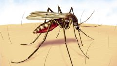 How to get rid of mosquitoes using odor
