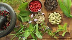 Специи и травы: как их хранить и использовать