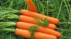 Простые украшения из моркови