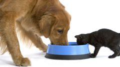 Как сделать сухой корм для кошек и собак?