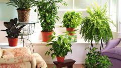 Основные причины гибели комнатных растений