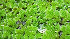 4 группы растений для искусственного водоема