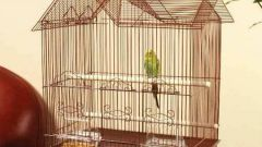 How to equip the parrot cage