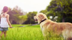 Роль животных в жизни человека