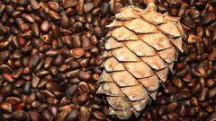 Чем полезны кедровые орешки