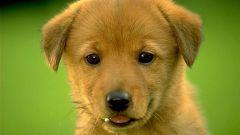 Как понять, стоит ли заводить собаку