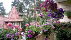 Особенности ухода за растениями на балконе