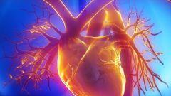 Какова роль сердца в кровообращении