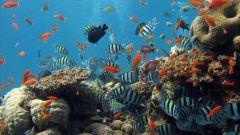 Как очистить воду в аквариуме