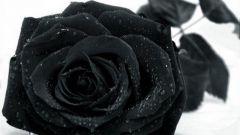 Почему черный цвет является цветом траура