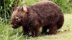 Какое самое редкое животное на планете