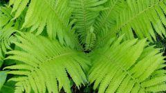 Что произошло с растениями в процессе эволюции