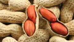 Что такое земляной орех