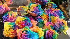 Как изменить цвет роз
