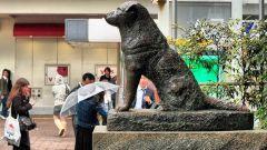 Настоящая история пса Хатико