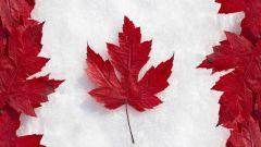 Когда впервые на канадском флаге появился кленовый лист