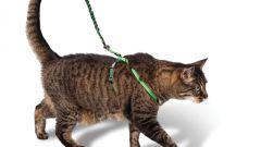 Зачем кошке поводок
