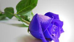 Как окрасить розы