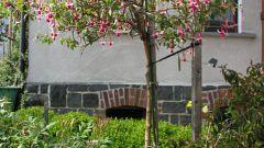 Как сформировать цветущее штамбовое деревце из фуксии