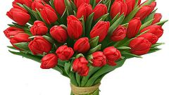 Как подготовиться к поздравлению одногруппниц на Восьмое марта