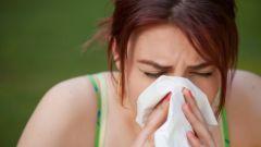 Как проявляется аллергия на собак