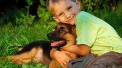 Как проверить, есть ли аллергия на собачью шерсть
