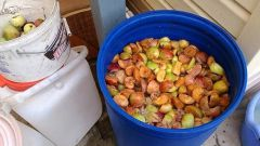 Как сделать брагу из яблок
