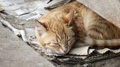 Как сделать домик для бездомного кота