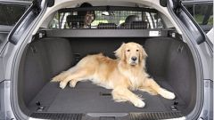 How to make a dog in the car is not rocking