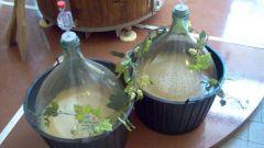 Как сделать брагу из винограда