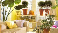 Если комнатным растениям не хватает света