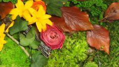 Как использовать стабилизированные цветы в интерьере